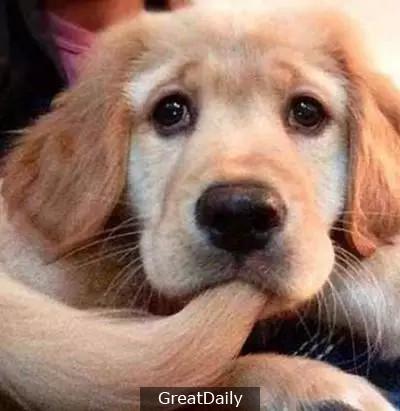 因為你沒養過狗,所以很多你都不懂!
